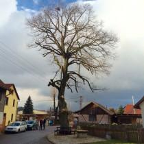 Dorflinde Wallrabs nach dem Schnitt durch den Hildburghäuseer Bauhof